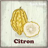Fresh Fruit Sketch Background. Hand Drawing Illustration Of Citron