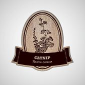 stock photo of catnip  - Health and Nature Collection - JPG