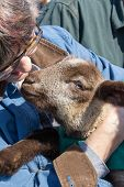 stock photo of snuggle  - Woman in glasses snuggling with a sweet lamb - JPG
