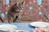 picture of stealing  - cat trying to steal some food from a dining table - JPG