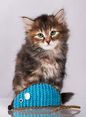 picture of mouse  - Cute siberian kitten with toy mouse over grey background - JPG