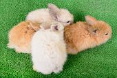 pic of cony  - small newborn rabbits on a green background - JPG