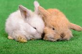 image of cony  - small newborn rabbits on a green background - JPG