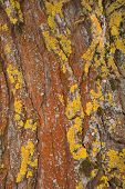 image of lichenes  - Abstract pattern of a rust - JPG