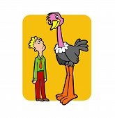 picture of ostrich plumage  - The illustrations shows that the ostrich taller than human - JPG