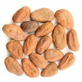 foto of cocoa beans  - Raw cocoa beans in square shape isolated top view - JPG