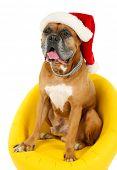 stock photo of dog christmas  - Cute dog in Christmas cap - JPG