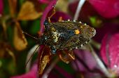 stock photo of water bug  - close up of a bug with rain drops - JPG