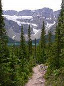 Crowfoot Glacier And Trail