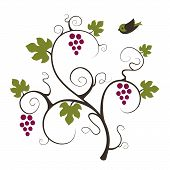 Grape vine and flying bird.