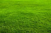 Green grass field from a park
