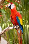 red and green macaw parrot on a branch