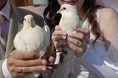 Hochzeit Weiße Tauben in Händen der Eheleute