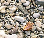 Shell On Sea Pebble