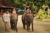 KO CHANG, Tailândia - 22 de dezembro: Elefante transporta crianças irreconhecíveis em 22 de dezembro de 2011, em Ko Cha