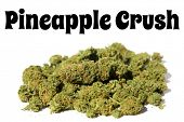Marijuana. Close up of Cannabis Sativa. Prescription Medical and Recreational Dried Marijuana Flower poster