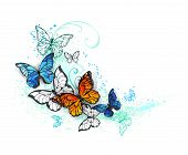 Realistic Butterflies, Blue Morpho And Orange Monarchs On A White Background, Painted With Green And poster
