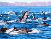 Patrulha golfinho