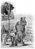 Trained elephant. Engraving by Specht. Published in magazine
