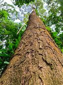 Bottom View Of Tall Tree In Tropical Forest. Bottom View Background Of Tree With Green Leaves And Su poster