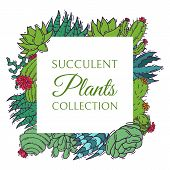 Succulents Decorative Cacti Green Plants Vector Illustration. Nature Botanical Houseplant Floral Ban poster