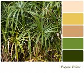 Papyrus plant background with complimentary colour swatches. Papyrus was used by the ancient Egyptia