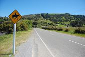 Yellow Road Sign Horseriding New Zealand