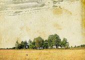 oak copse on grunge background