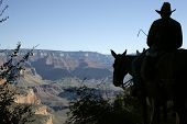 Grand Canyon Mule Rider