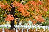 stock photo of arlington cemetery  - Arlington National Cemetery near to Washington DC - JPG
