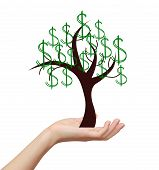 Woman Hand Holding Money Tree With Dollars Sign Isolated On White