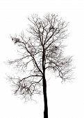 Silhouette of dead tree