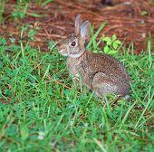 Shady conejo