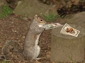 Gray Squirrel And Money