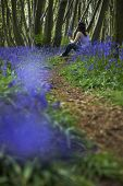 Rear view of woman sitting in bluebell woods