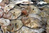 image of faber  - John Dory on a fishmonger - JPG