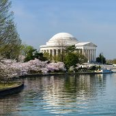 stock photo of thomas jefferson memorial  - Thomas Jefferson Memorial during cherry blossom festival in Washington DC United States - JPG