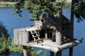 Animal Tree House