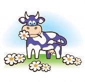 Funny cow in Milka style