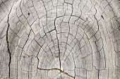 Wood Pattern Trunk Texture
