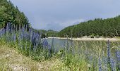 Small dam and beauty blue wildflowers