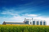 picture of silos  - Grain Silos in Corn Field - JPG
