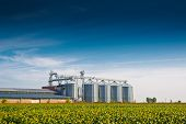 stock photo of silos  - Grain Silos in Sunflower Field - JPG