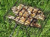 Seabass and Dorado fish grilled Top View on Green Grass Background