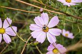 Flowers & Bumblebee