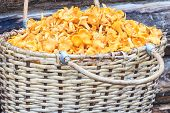Basket of mushrooms on log background