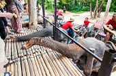 Tourists Feeding The Elephants With Bananas Before Start The Tours