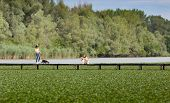 stock photo of dock a lake  - Two girls walking dogs on wooden dock on the lake - JPG