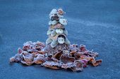 stock photo of turtle shell  - Frozen up shell turtles stack with ice up pedals around them. ** Note: Shallow depth of field - JPG