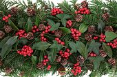 Winter and christmas flora with red berry holly, ivy, mistletoe and spruce fir over white background